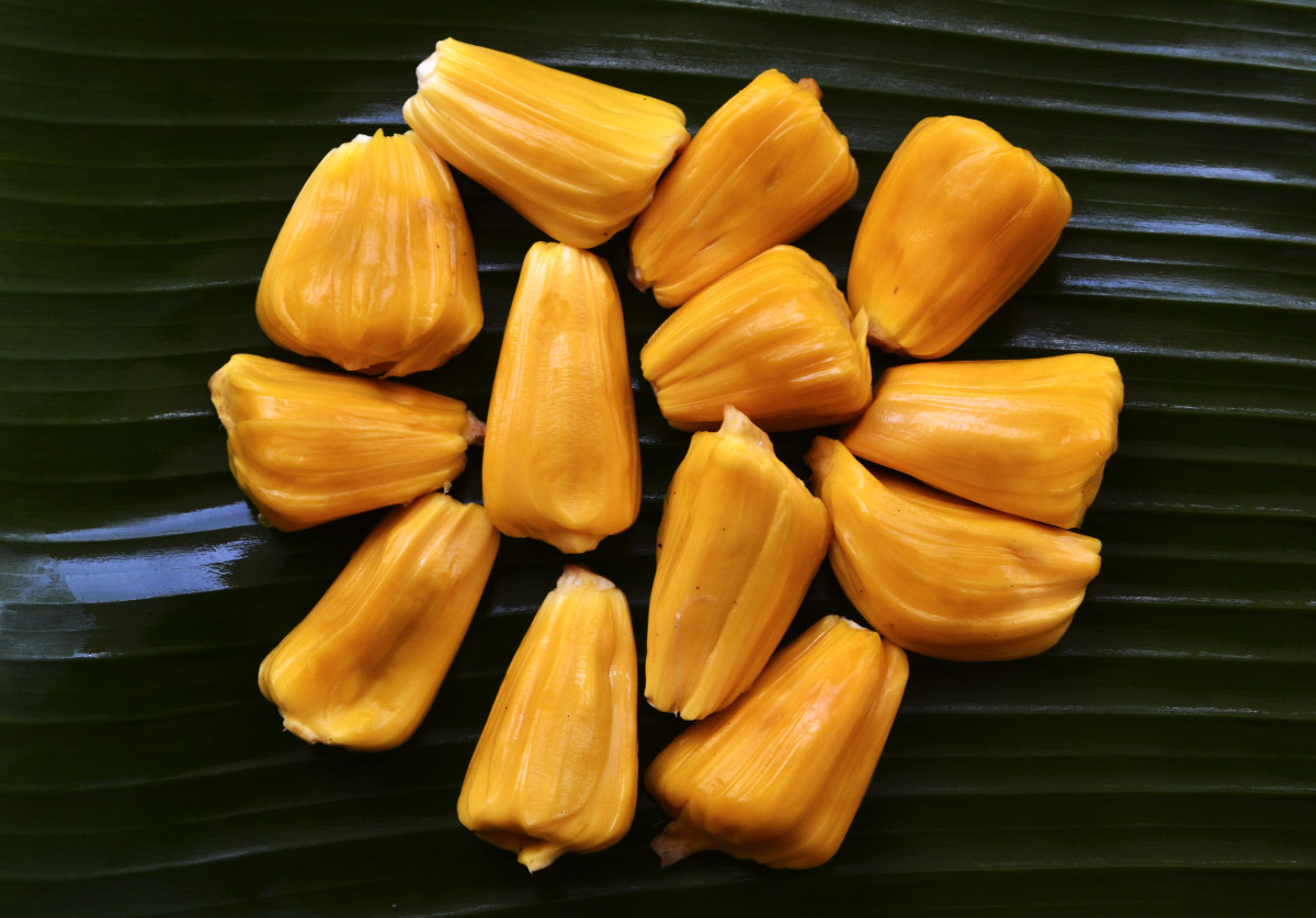 jackfruit seed bulbs