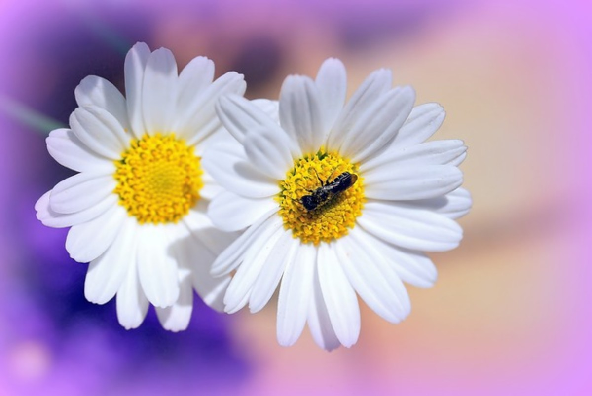 A bee can produce 2 pounds of honey by tapping into 2 million flowers.