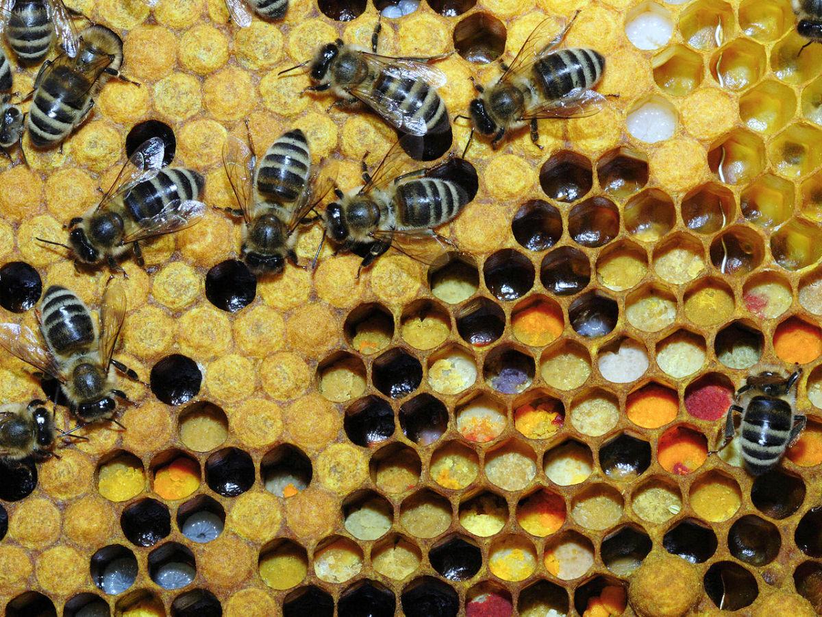 Bees gathering pollen.