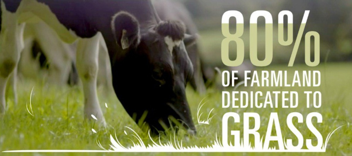 Ireland's weather produces healthy grasslands naturally - perfect for raising grass-fed animals like beef, dairy cows, and sheep.
