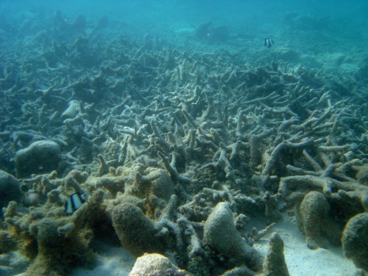 A wasteland of dead coral.