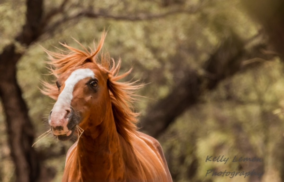 the-wild-horses-of-the-lower-salt-river-in-arizona