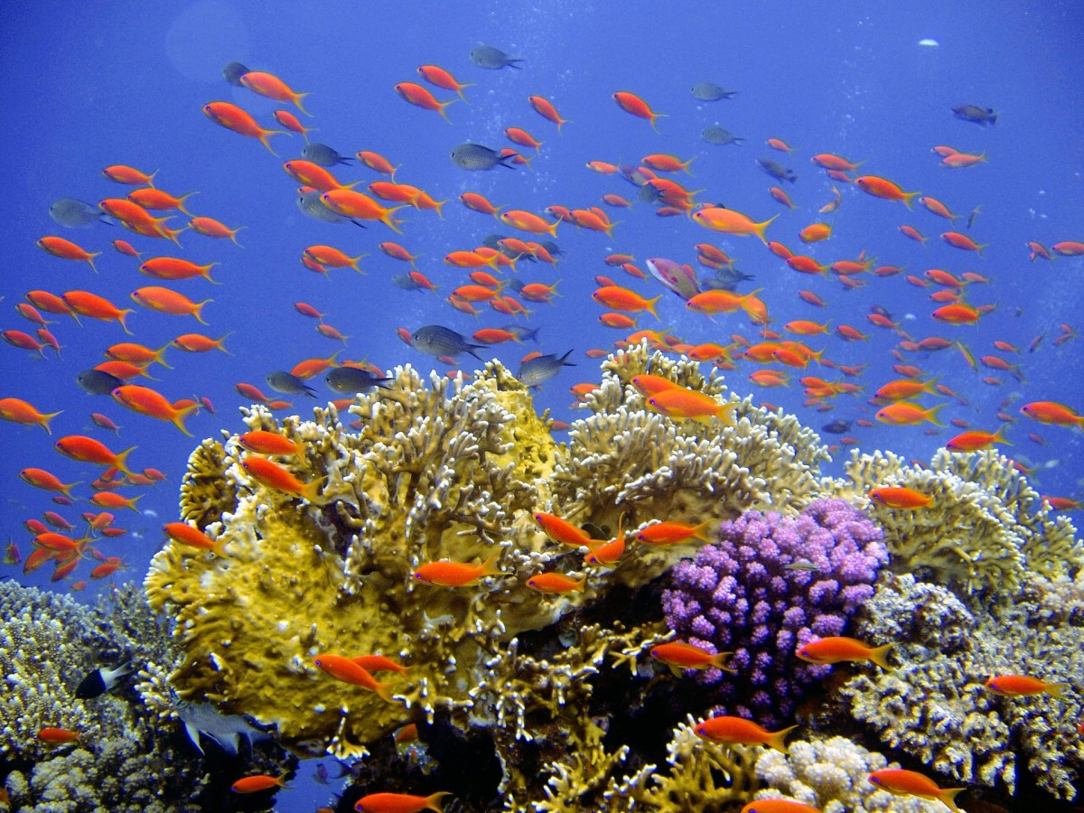 It is crucial that we do what we can to maintain the health and safety of the reefs that are still alive.