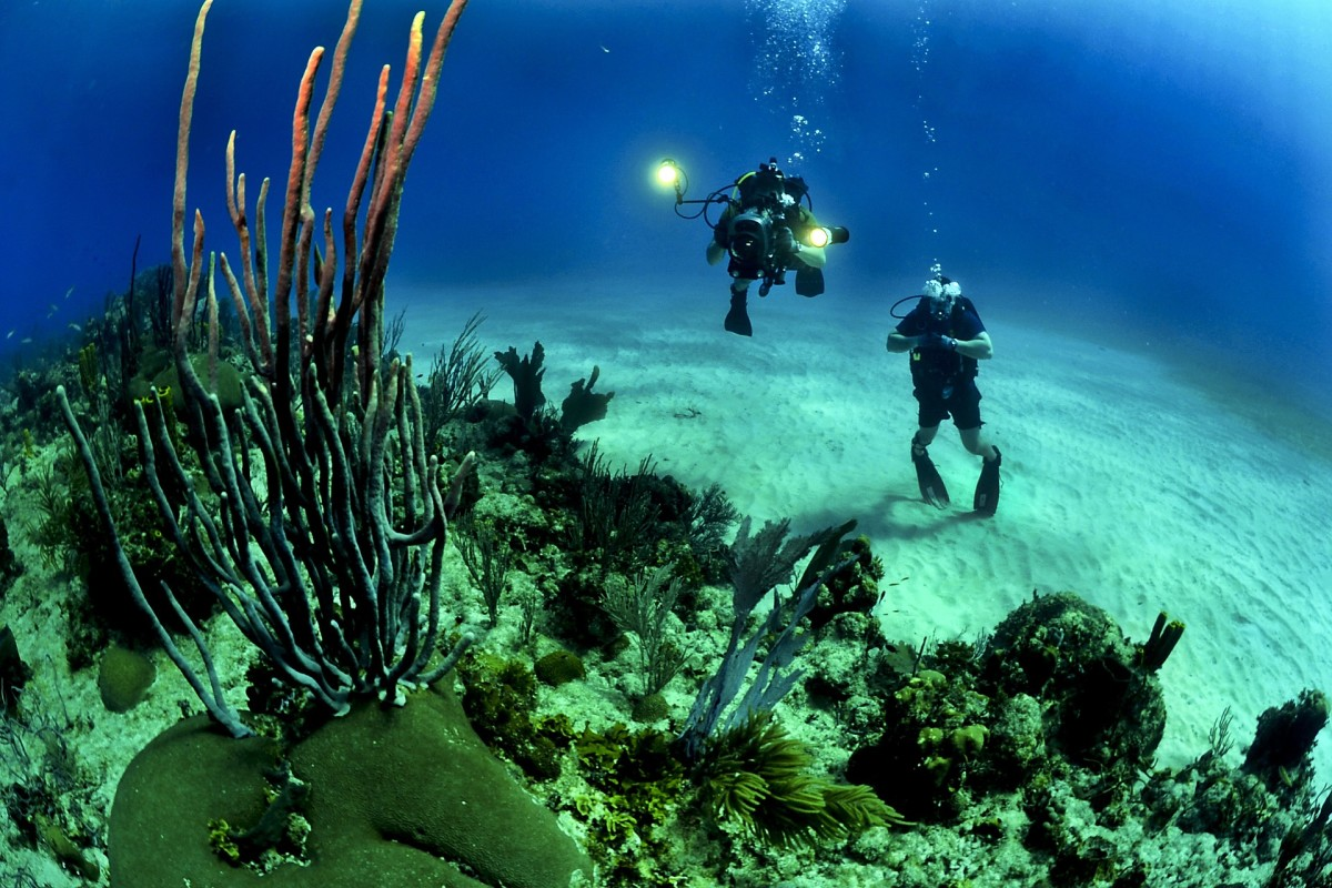If we keep reefs healthy, they'll be around for us to observe and enjoy for centuries to come.