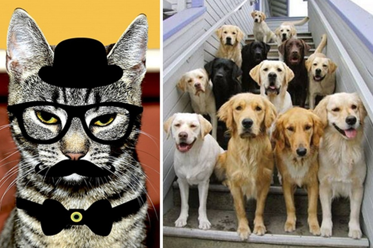 A Free Feline Libertarian and a Canine Co-op Kennel