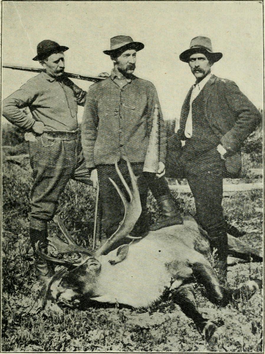 Caribou shot by Dr. W. L. Munro 1907