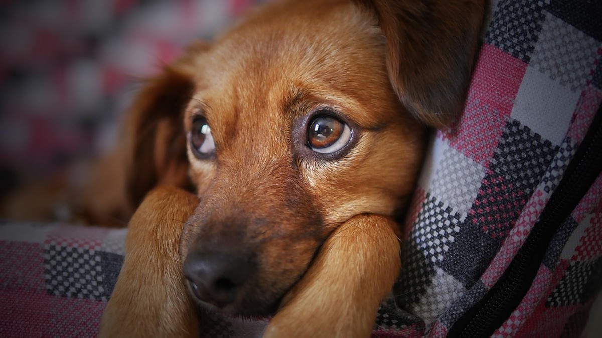 Every year around July 4 all across America, animal rescue shelters are filled with runaway pets that panic and escape their owners because of the loud sounds of fireworks. Others are never found.