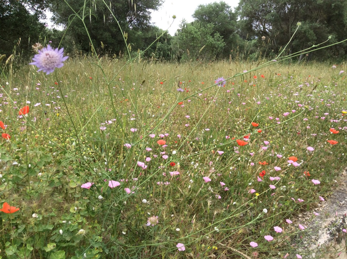Wildflowers, Beautiful And Beneficial