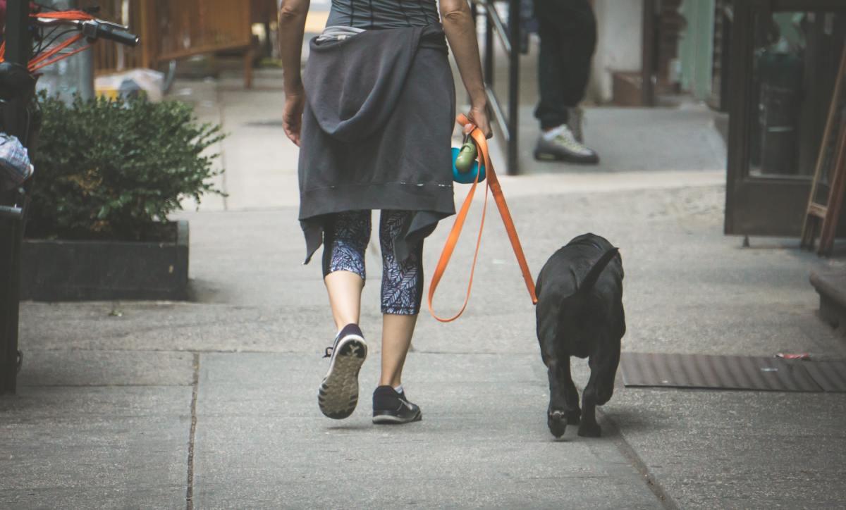 Take someone's dog for a walk.