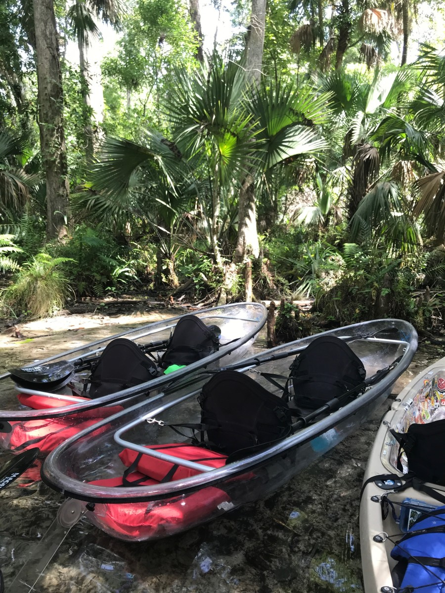 Is the Clear Kayak Tour in Florida Really Worth It?