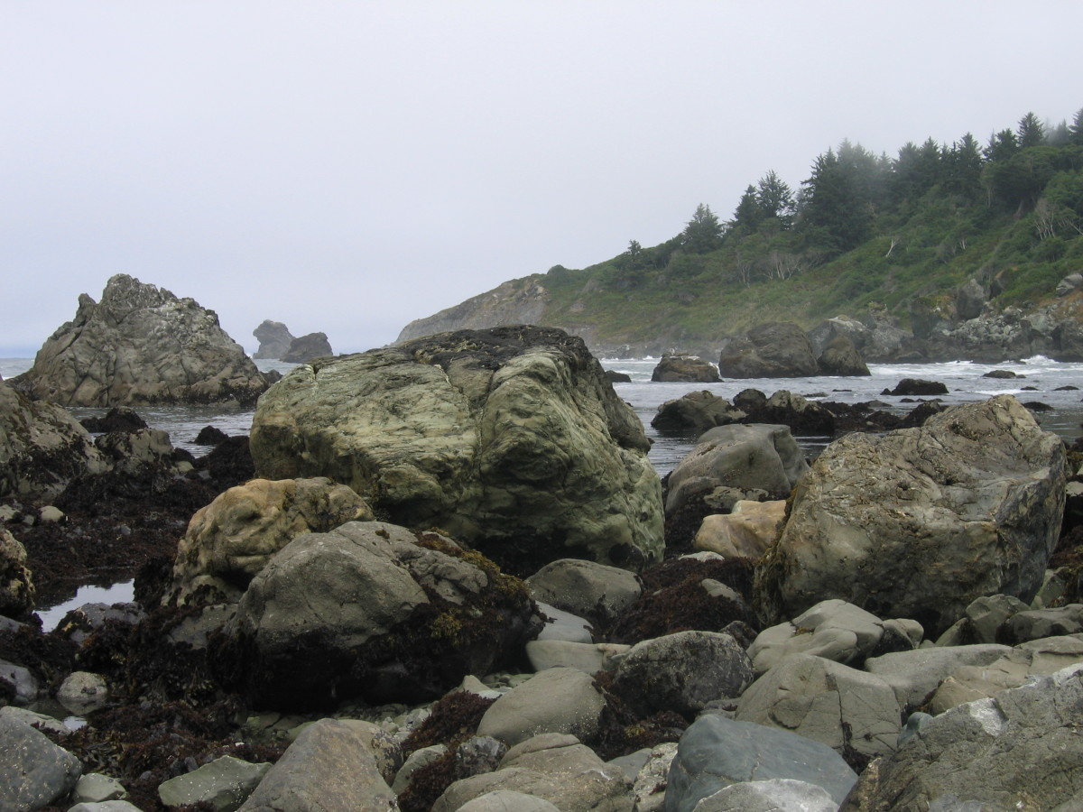 You'll find tide pools at rocky Palmer's Point Beach. A playland for climbing and exploring. Be careful on the steep steps down to the beach, they can be a bit slippery in the coastal fog.