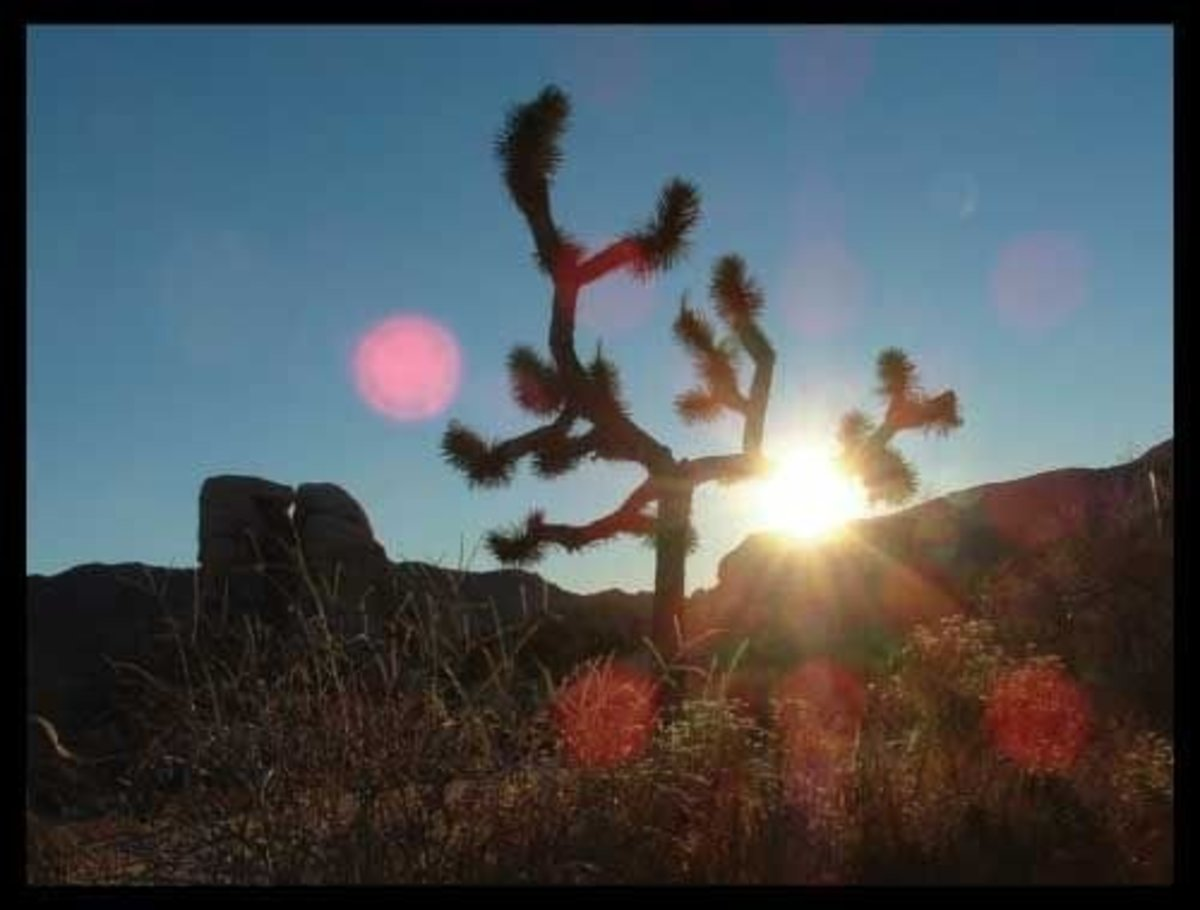 firt-timers-guide-to-joshua-tree