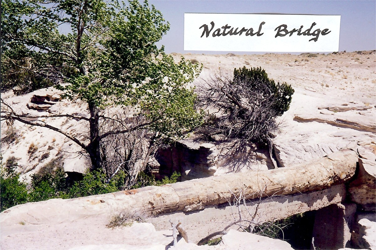 This fallen petrified tree is called the Natural Bridge in the Badlands of the Petrified Forest National Park