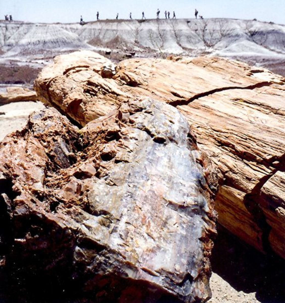 People looking down upon the Petrified Forest National Park