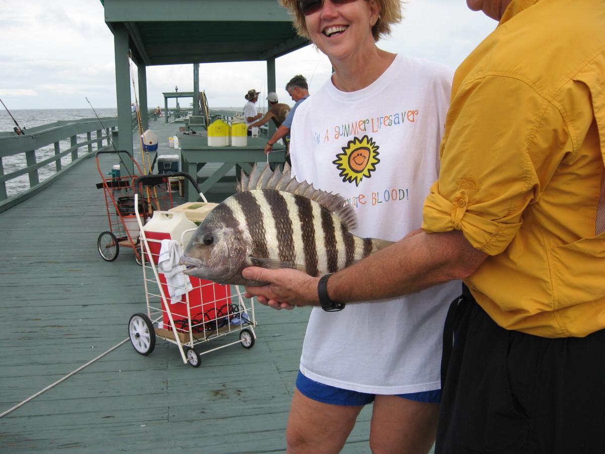 saltwater-fishing-sheepshead