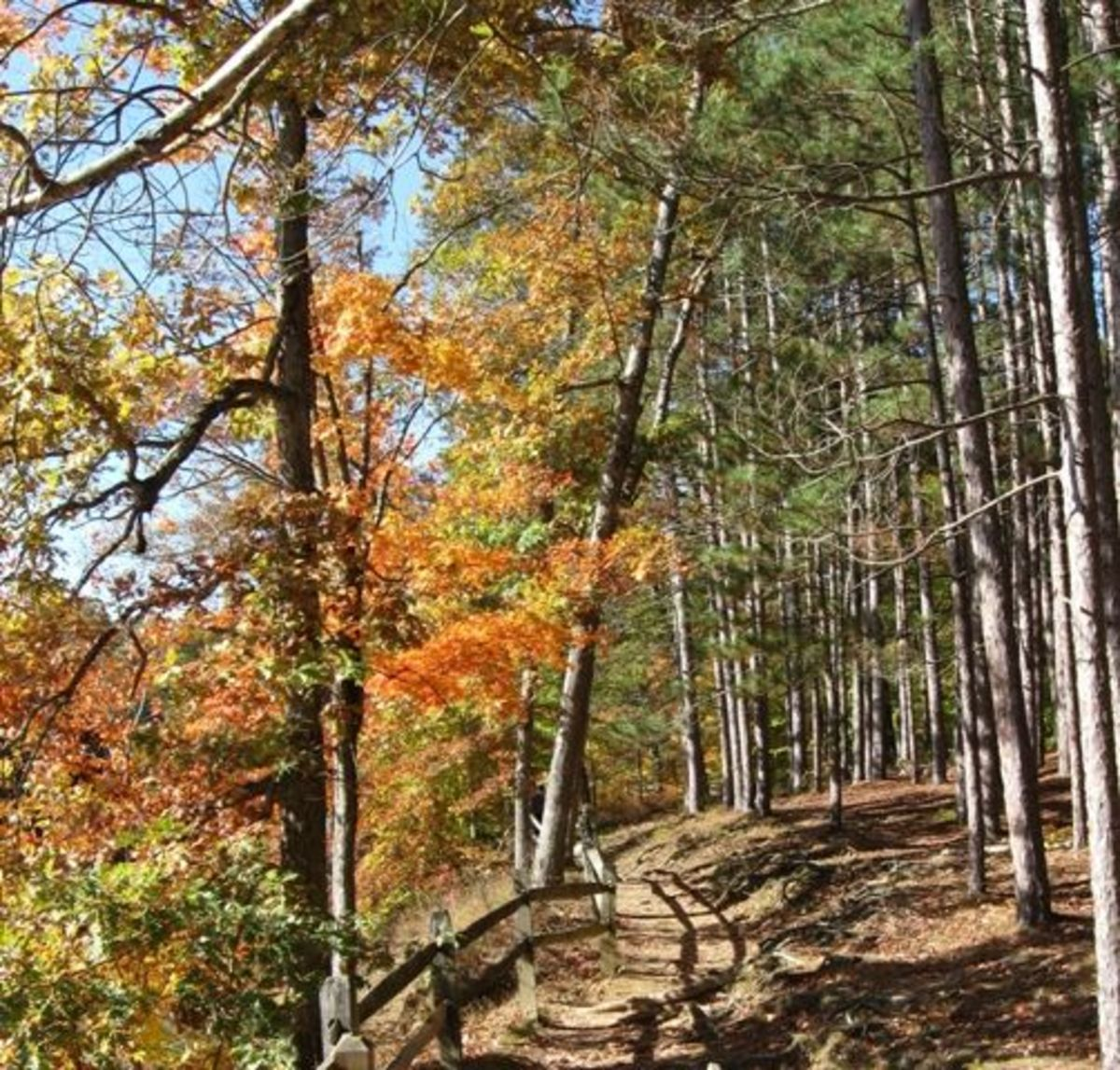 brown-county-state-park-2