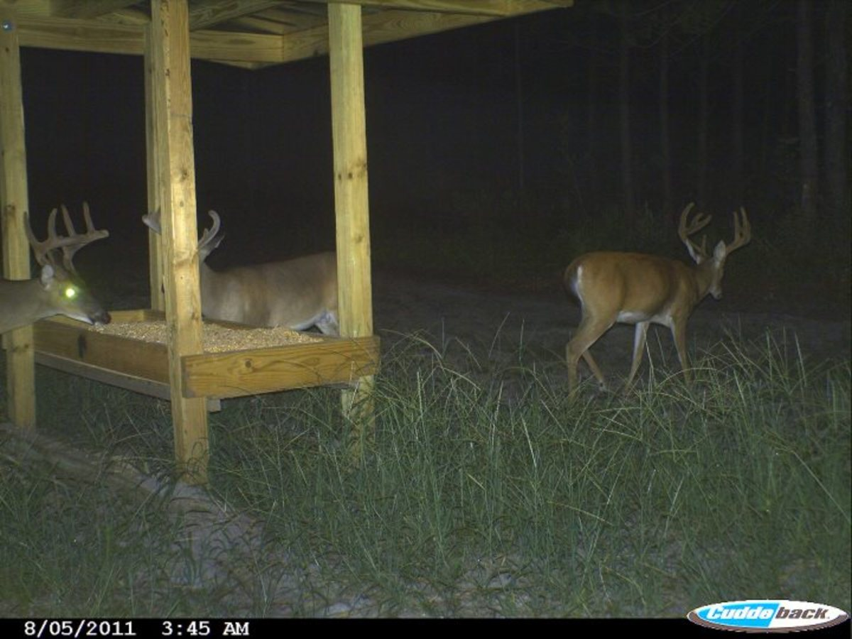 Trophy whitetails