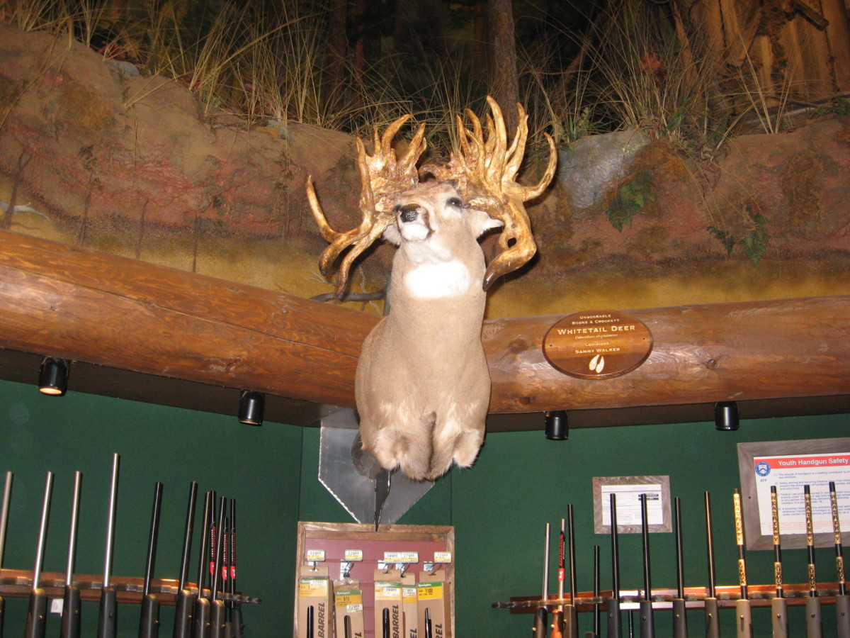 free-natural-hunting-scents-for-whitetail-deer