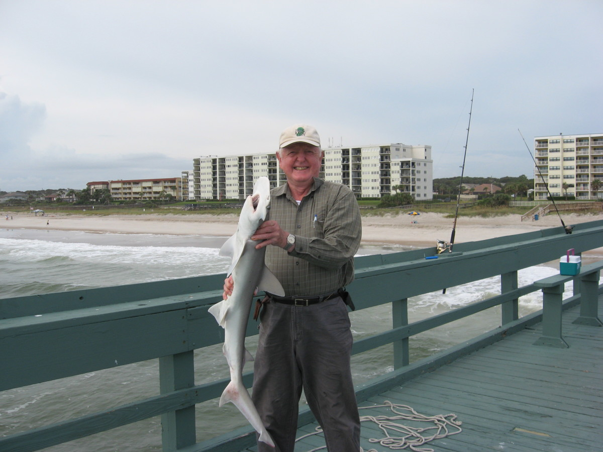 Chum from a pier to attract sharks and other big fish.