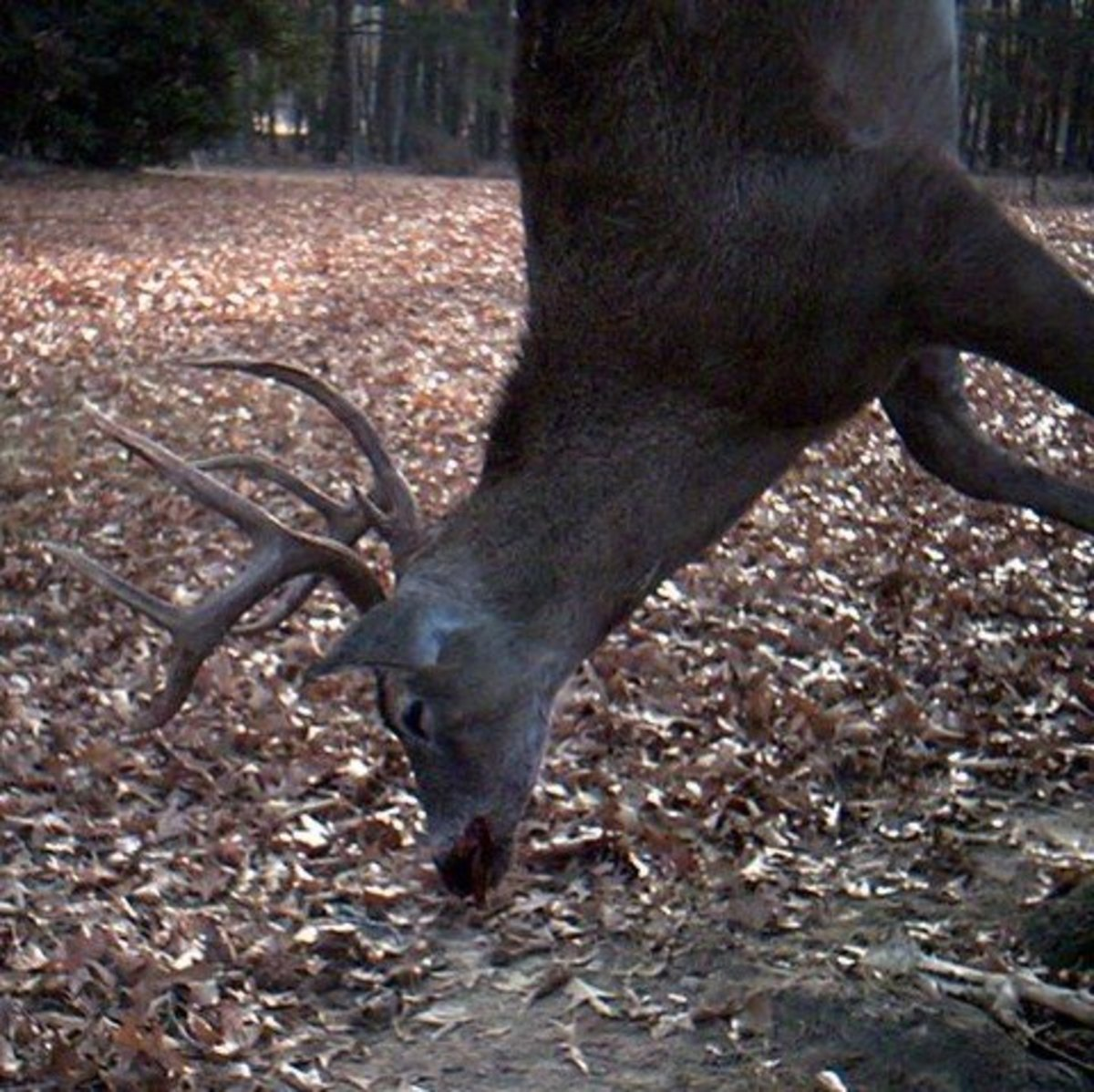 how-to-deal-with-a-man-obsessed-with-hunting