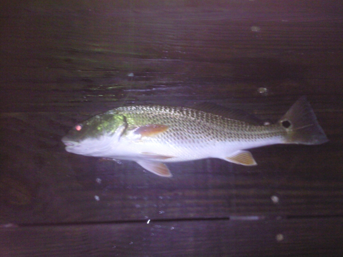5-reasons-why-its-better-to-fish-at-night