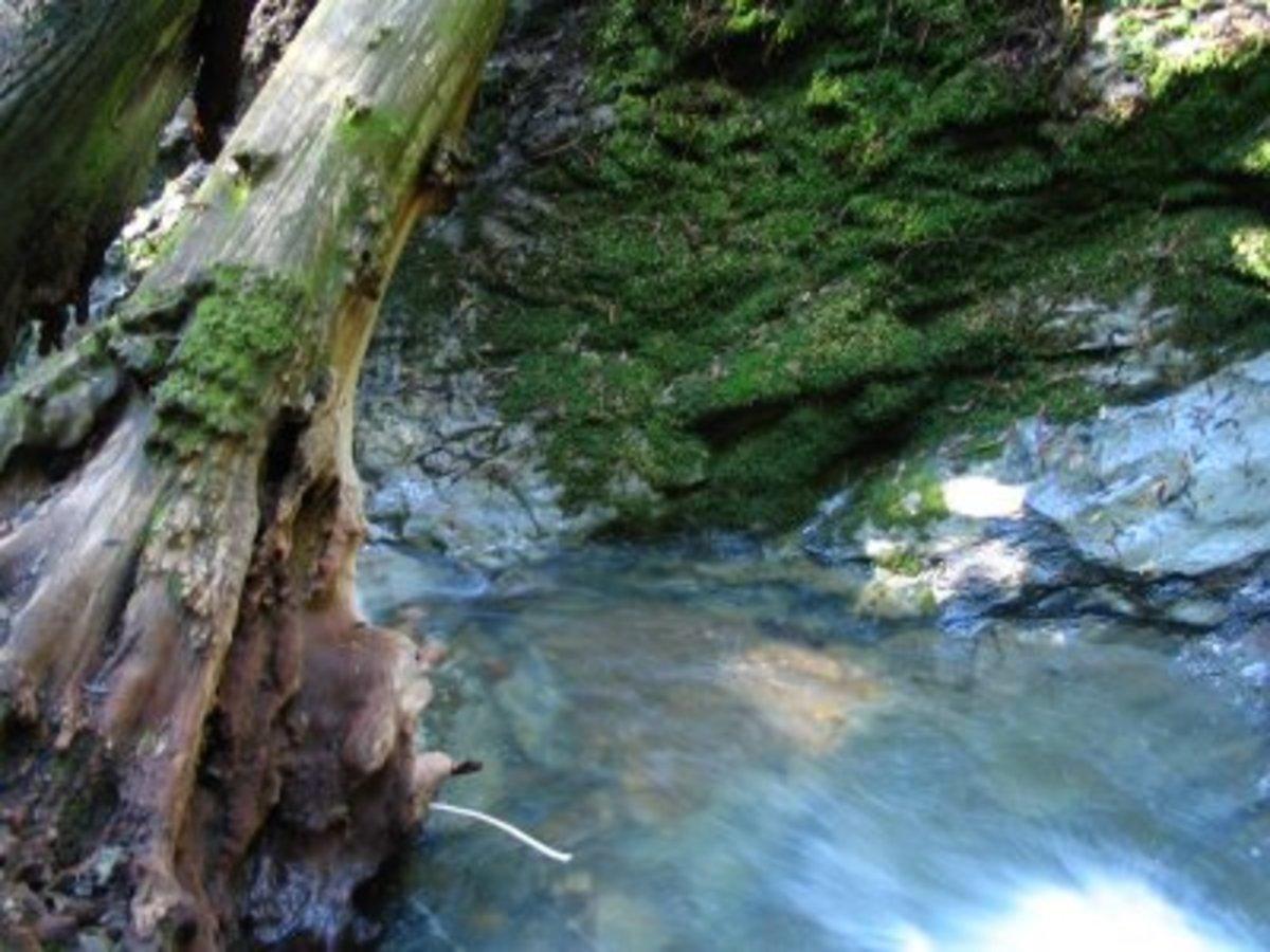 Matt Davis Steep Ravine Trail