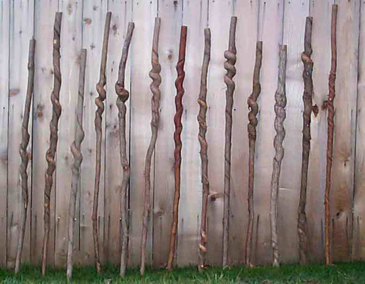 "Walkingstick Craft Making Walking ""wood blanks"" from natural good tree Sticks"