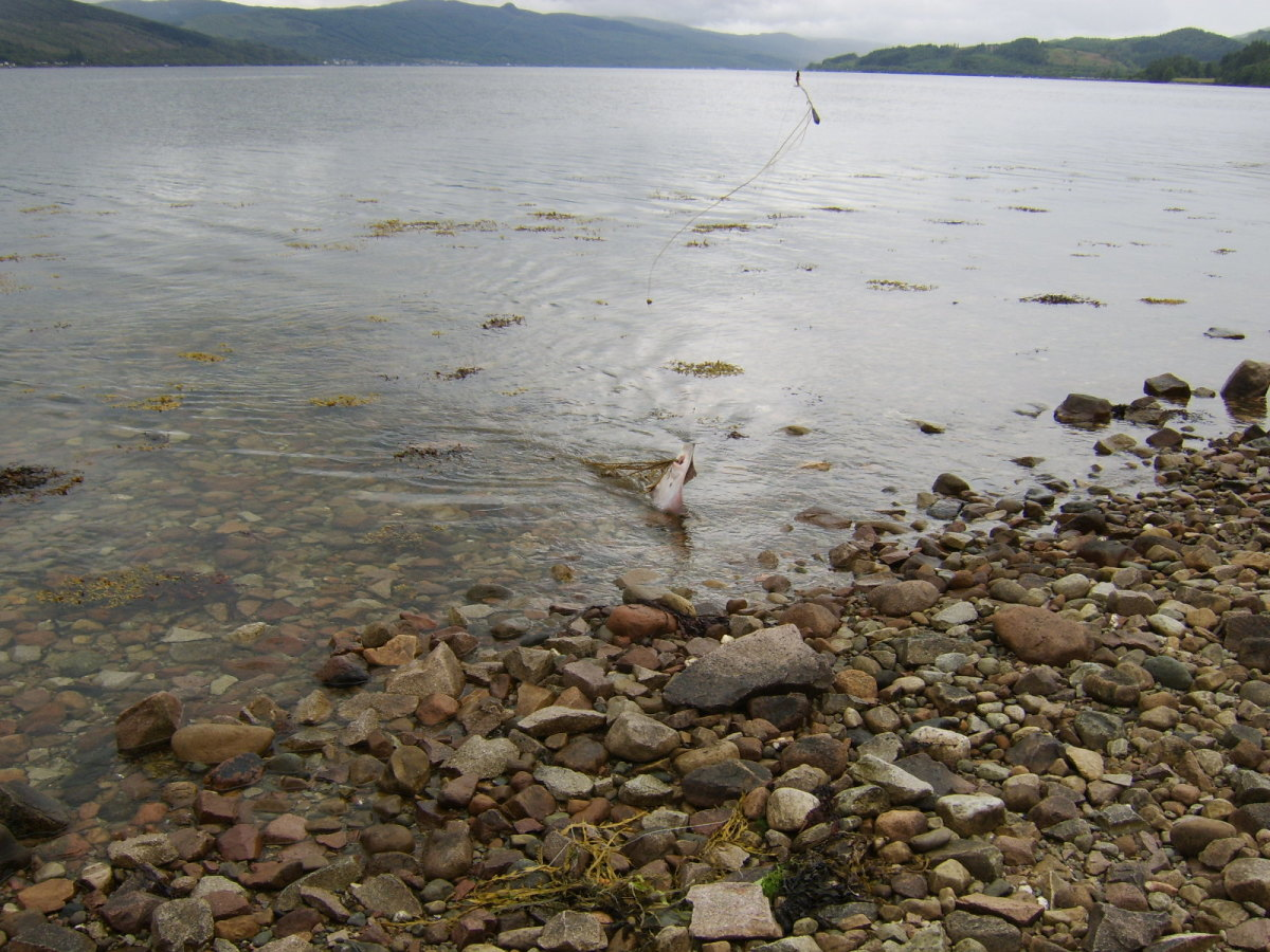 An audible cheer was heard as proof was obtained that there are fish in this part of Loch Fyne...