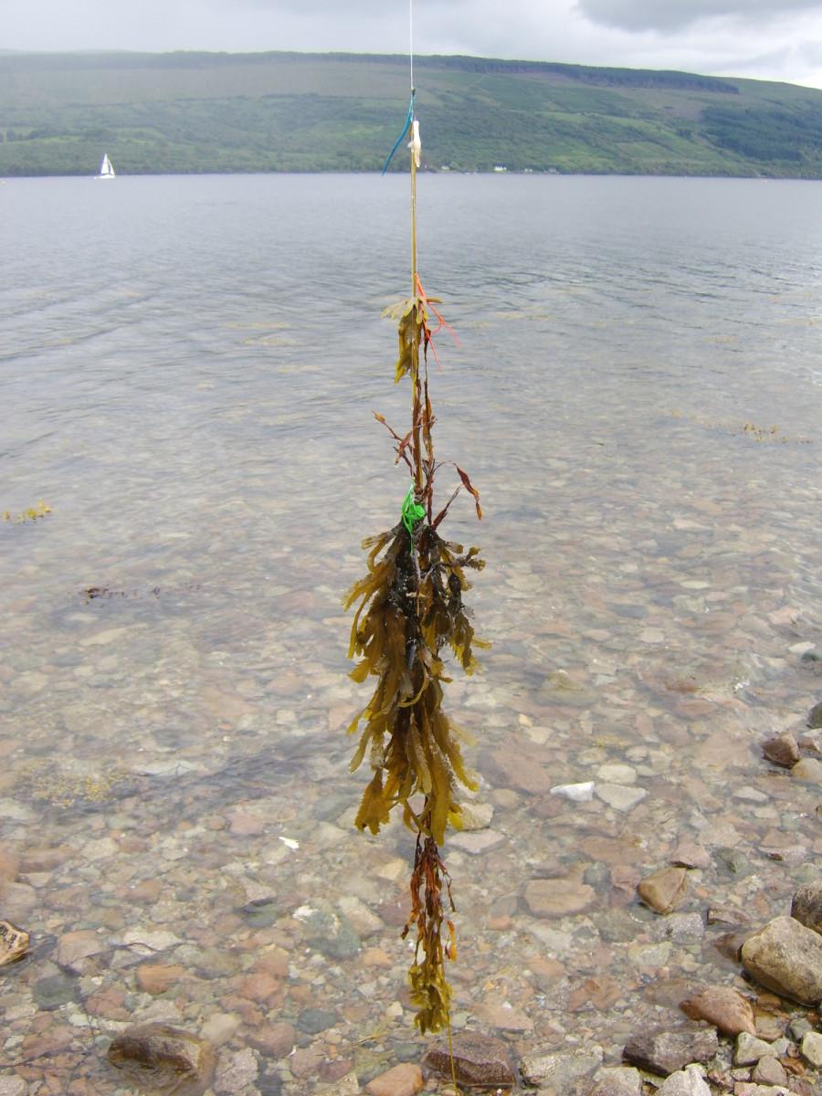 fishing-inveraray-scotland