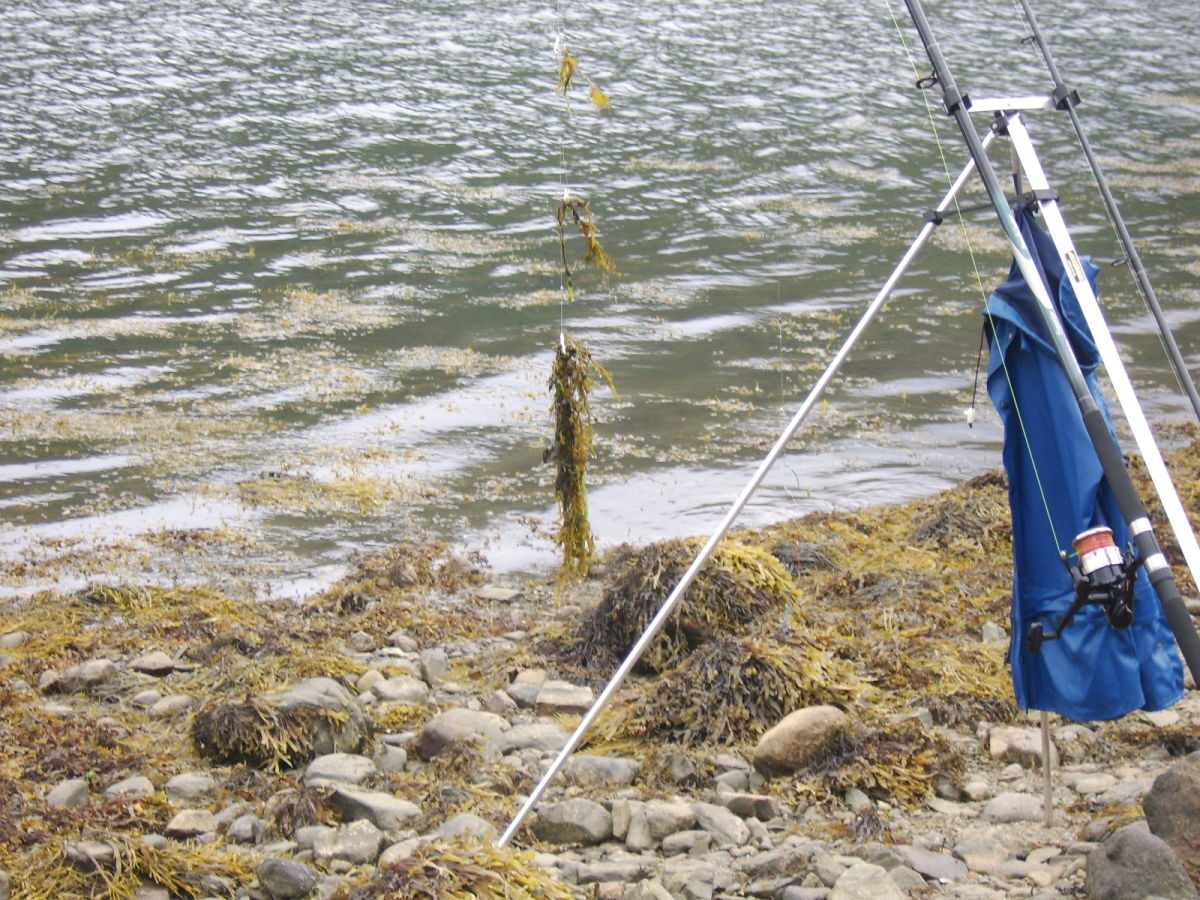 The weed along the shoreline is another reason to avoid fishing the higher stages of the tide