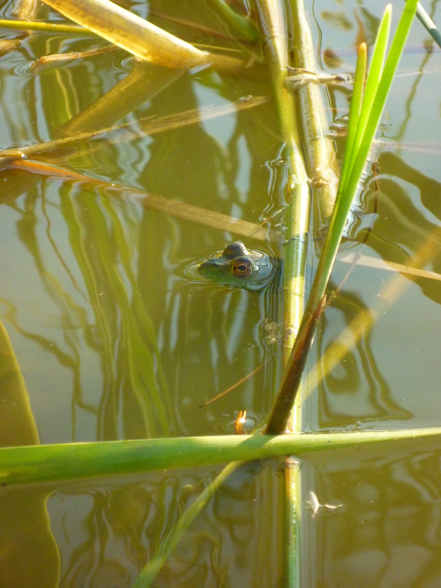 If you're a fan of frog legs, McKay Lake is the perfect place to snag a few bullfrogs.