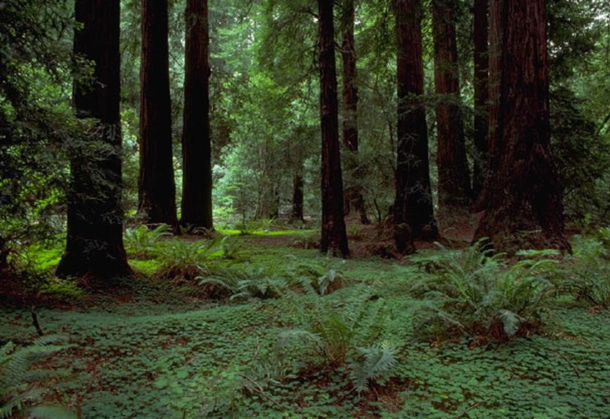 muir-woods-mother-natures-handy-work