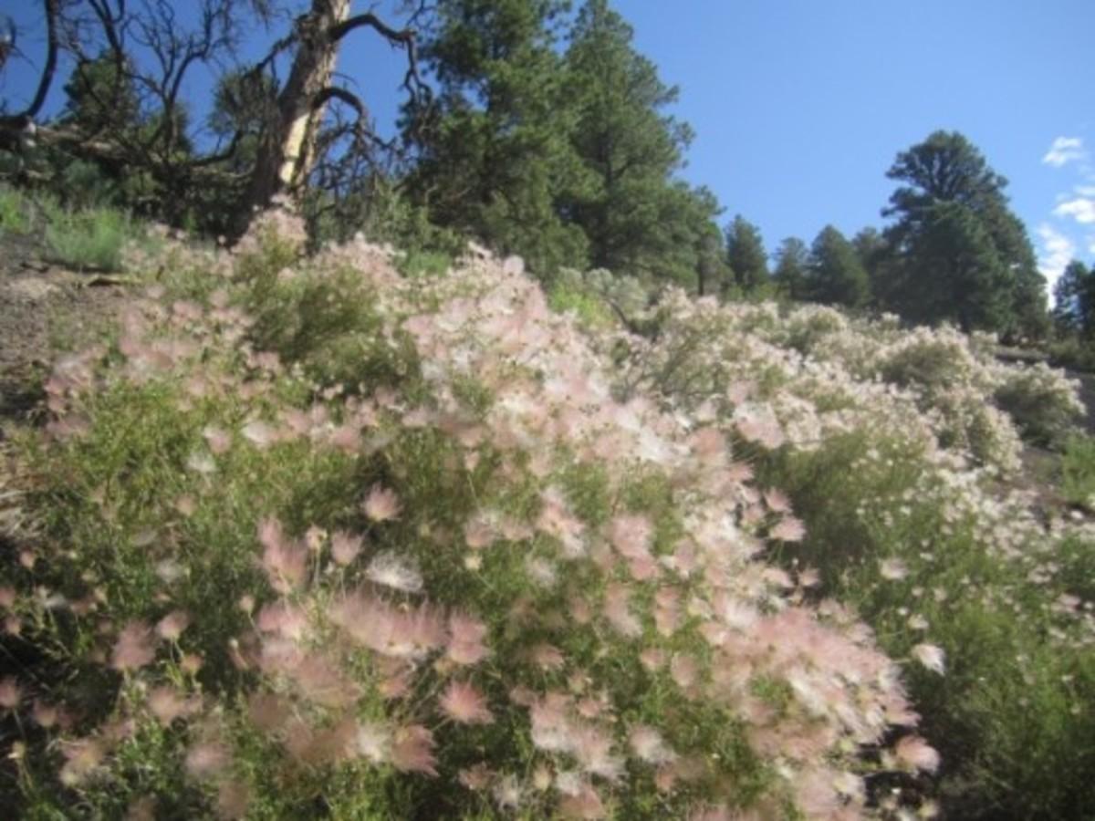 Wildflowers on O'Leary Peak