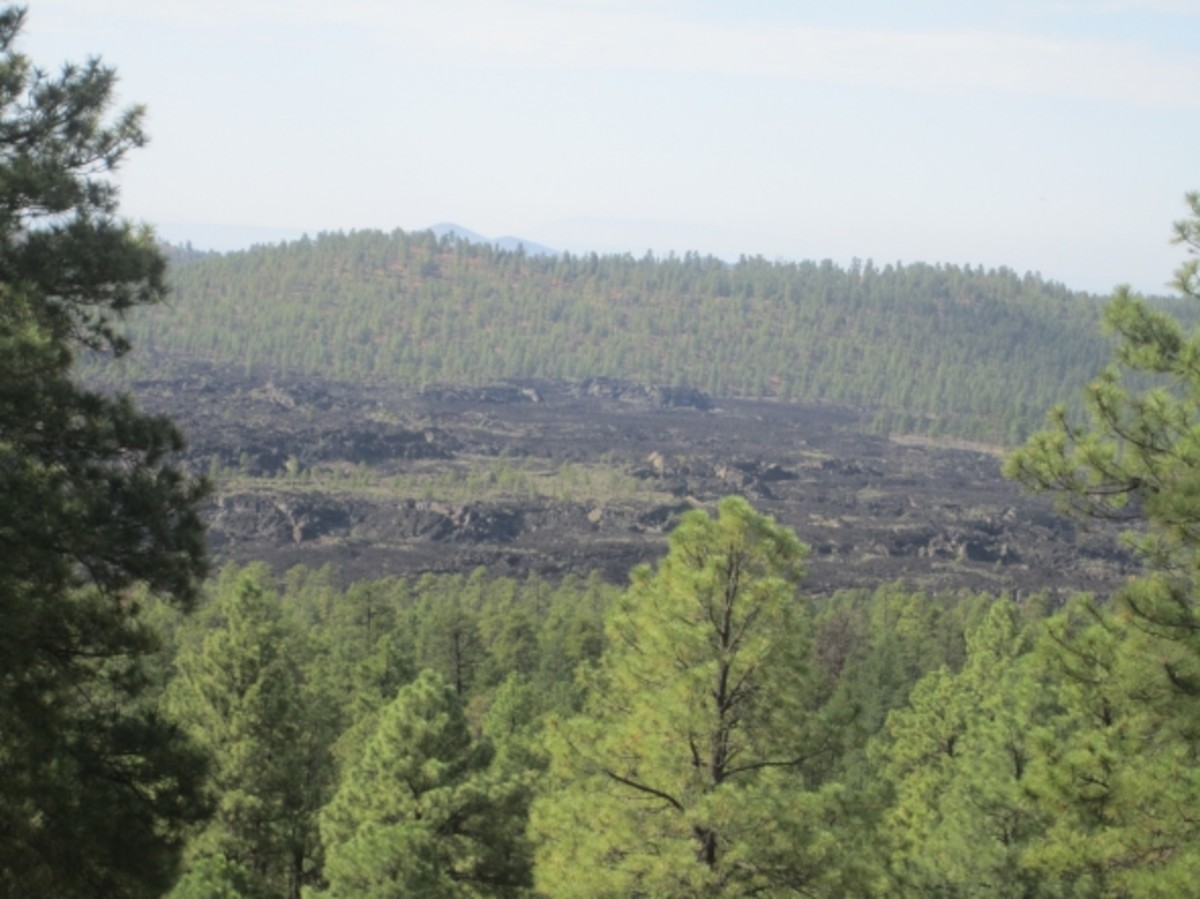 View of lava field from O'Leary Peak