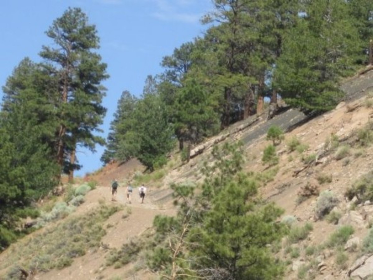 O'Leary Peak Lookout Trail