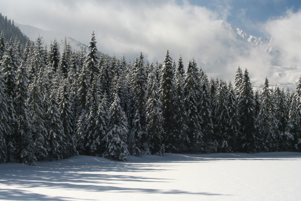 Winter in the Appalachians.