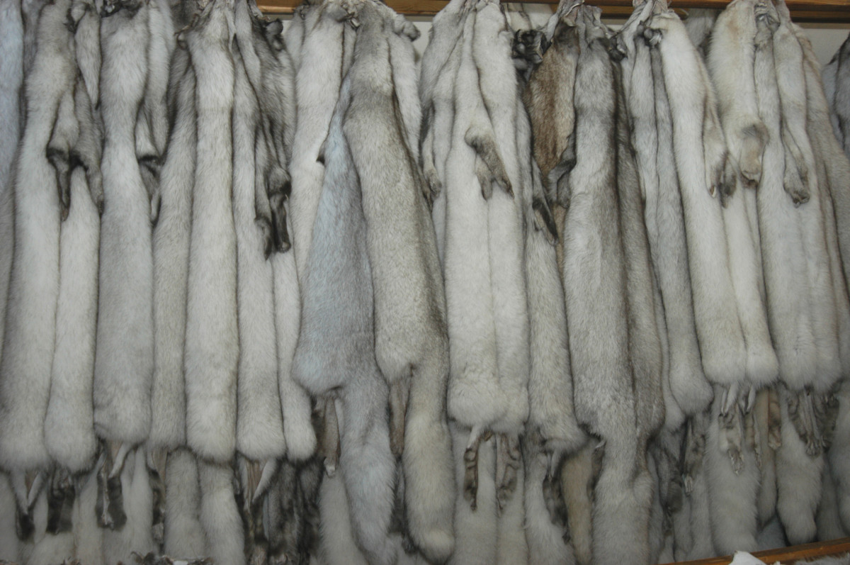 An example of case pelts