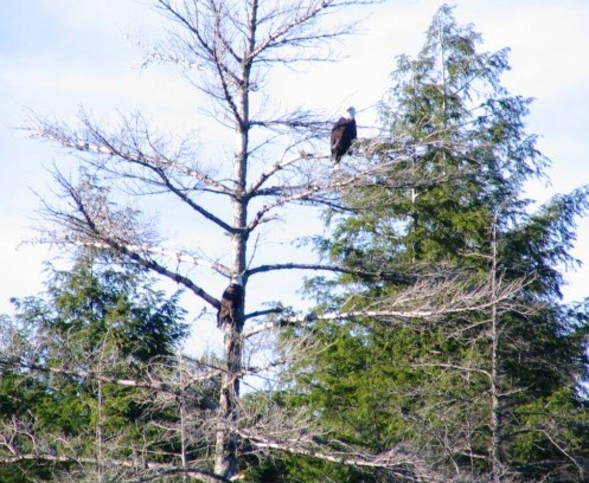 the-sylvania-wilderness-solitude-and-smallmouth