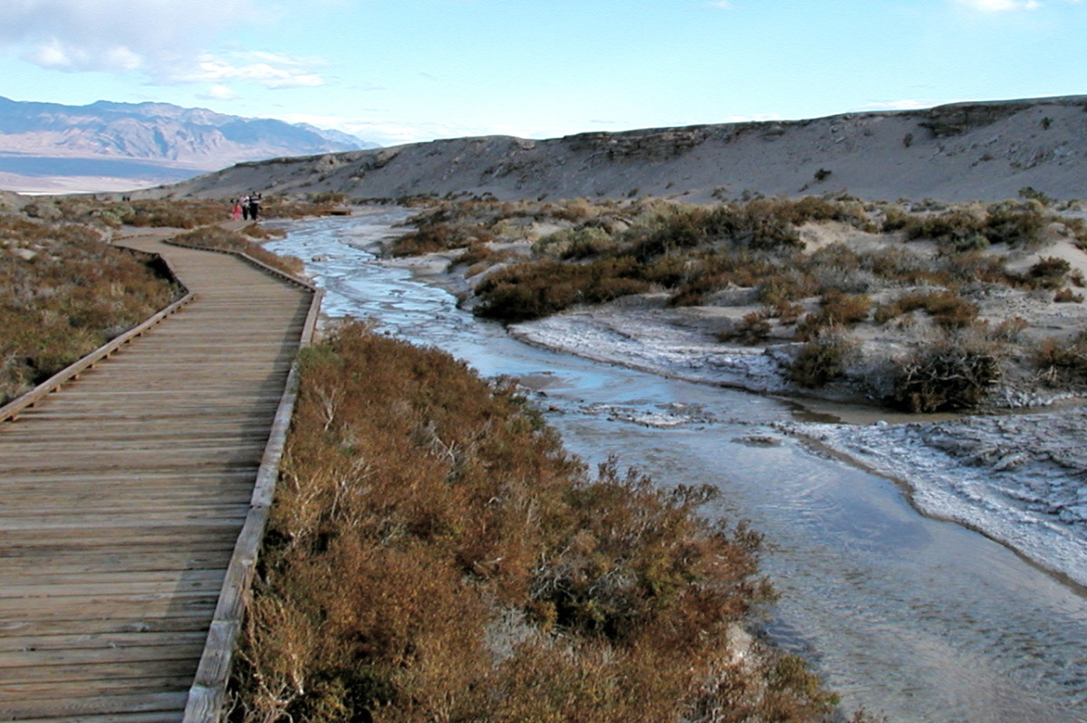 A wooden boardwalk meanders alongside Salt Creek where you can see the rare little pupfish swimming.