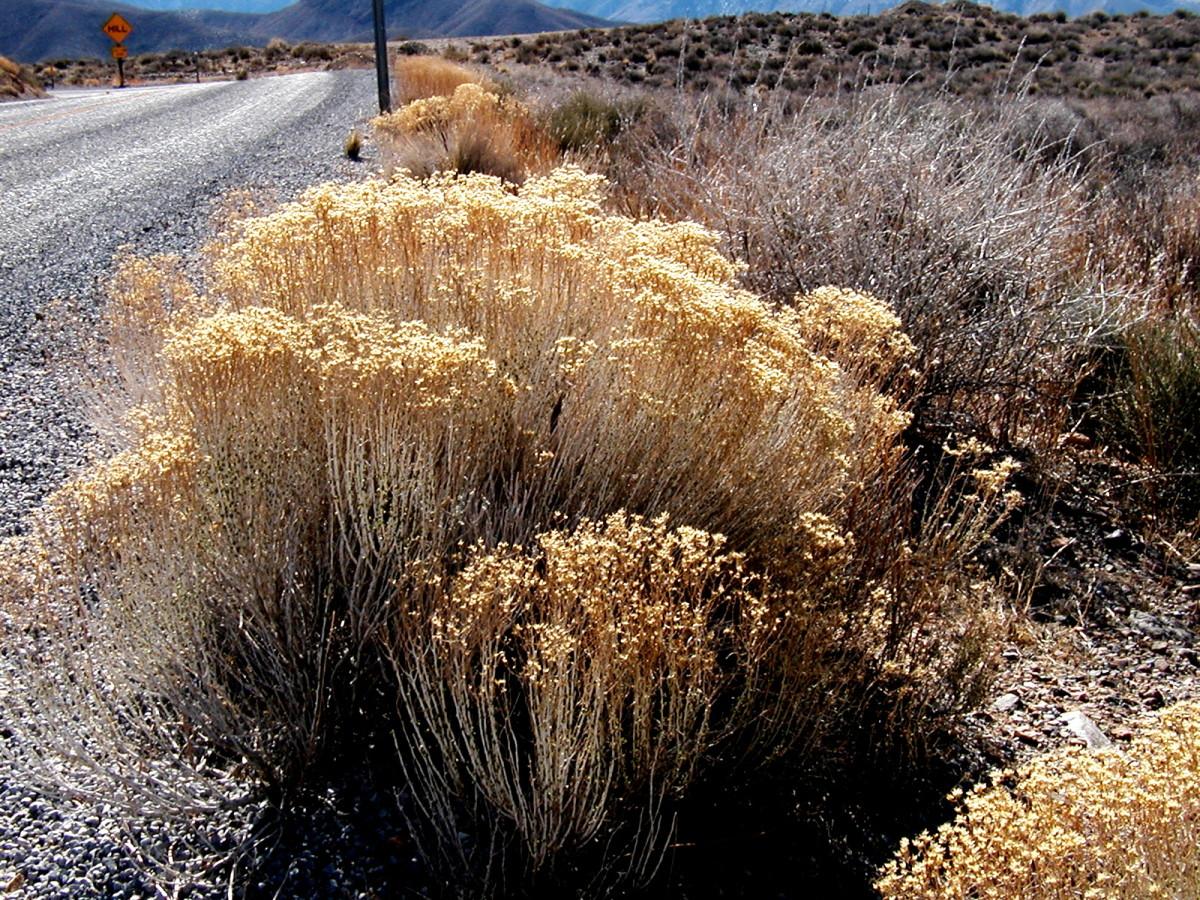 Grasses and brush along the roadside.