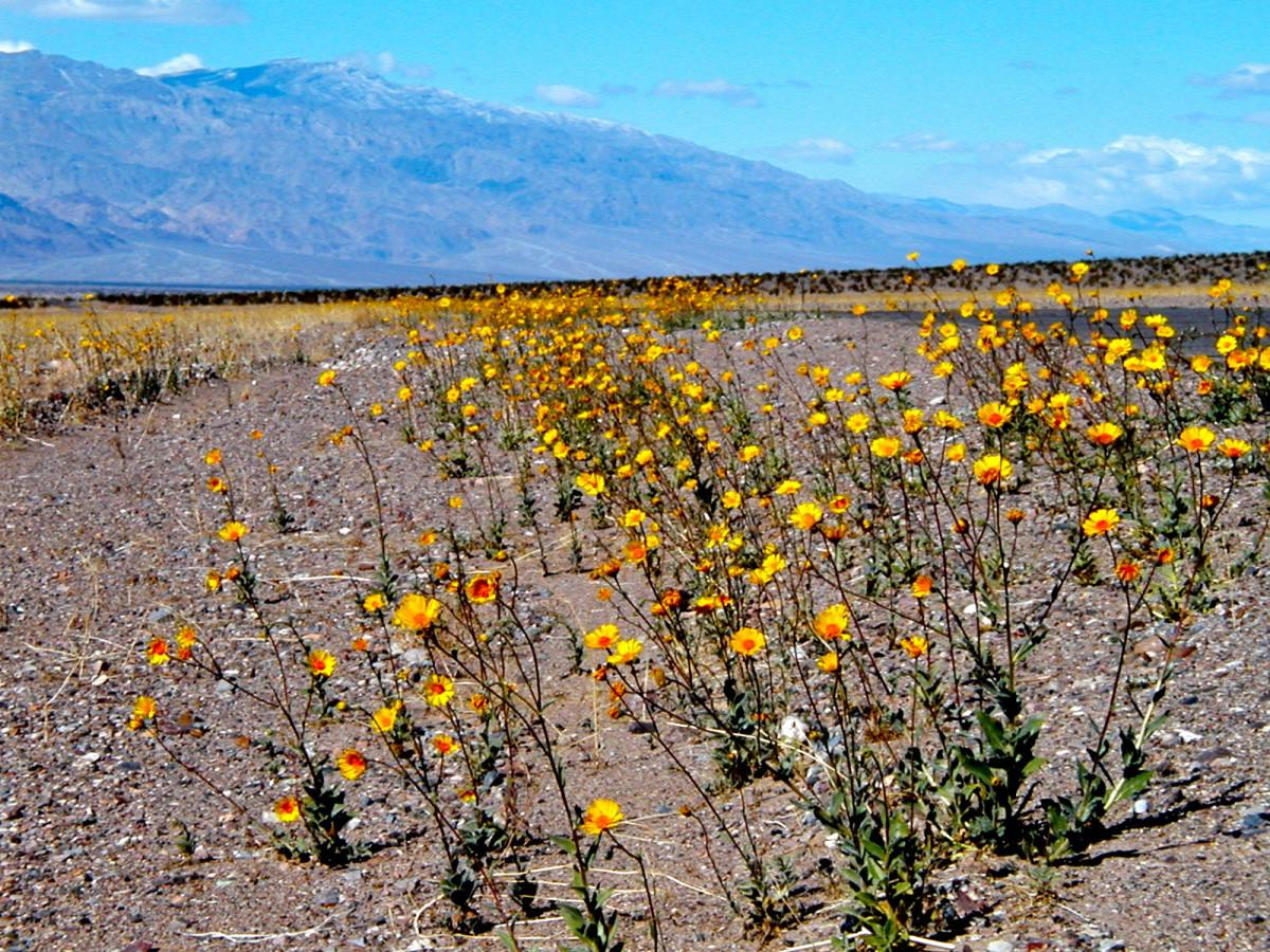 Wildflowers along the roadside.