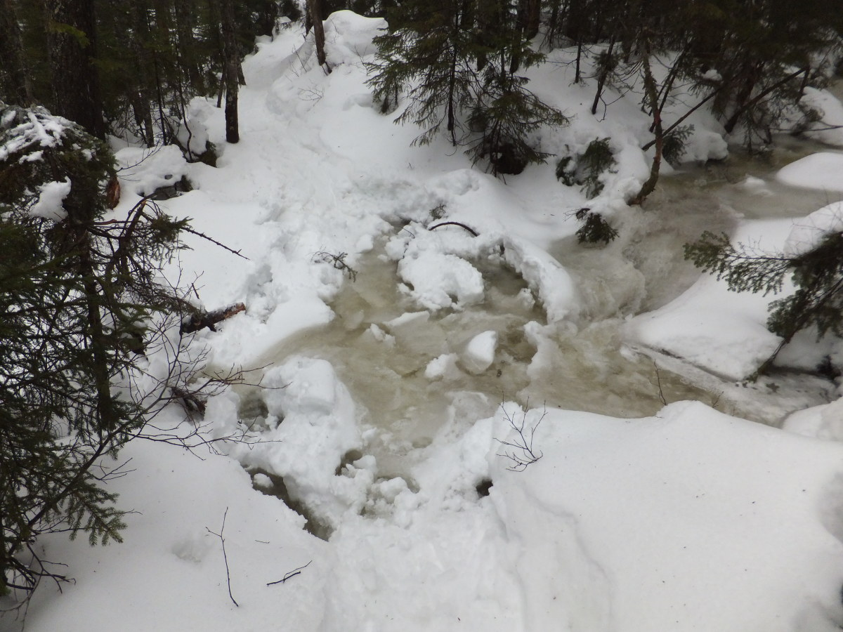 This is one of the many  feeder streams for Uphill Brook that I crossed.