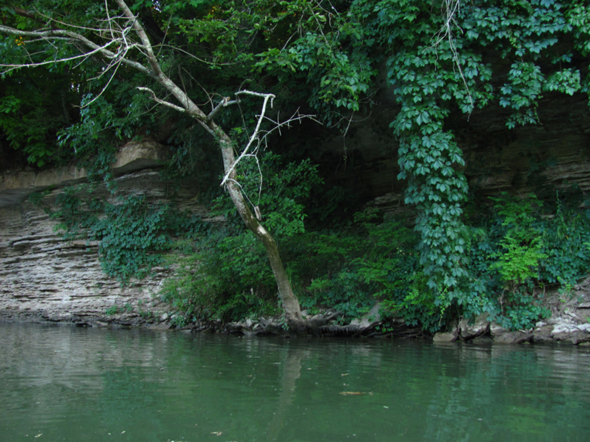 Limestone cliffs and steep banks covered in thick foliage line the Duck River's shores.