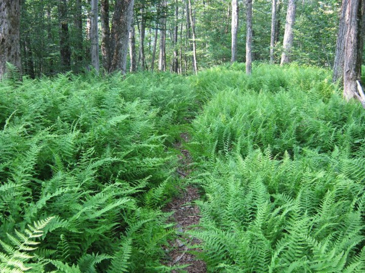 Hiking through fern shrouded trails like this one, is an inexpensive activity while camping.