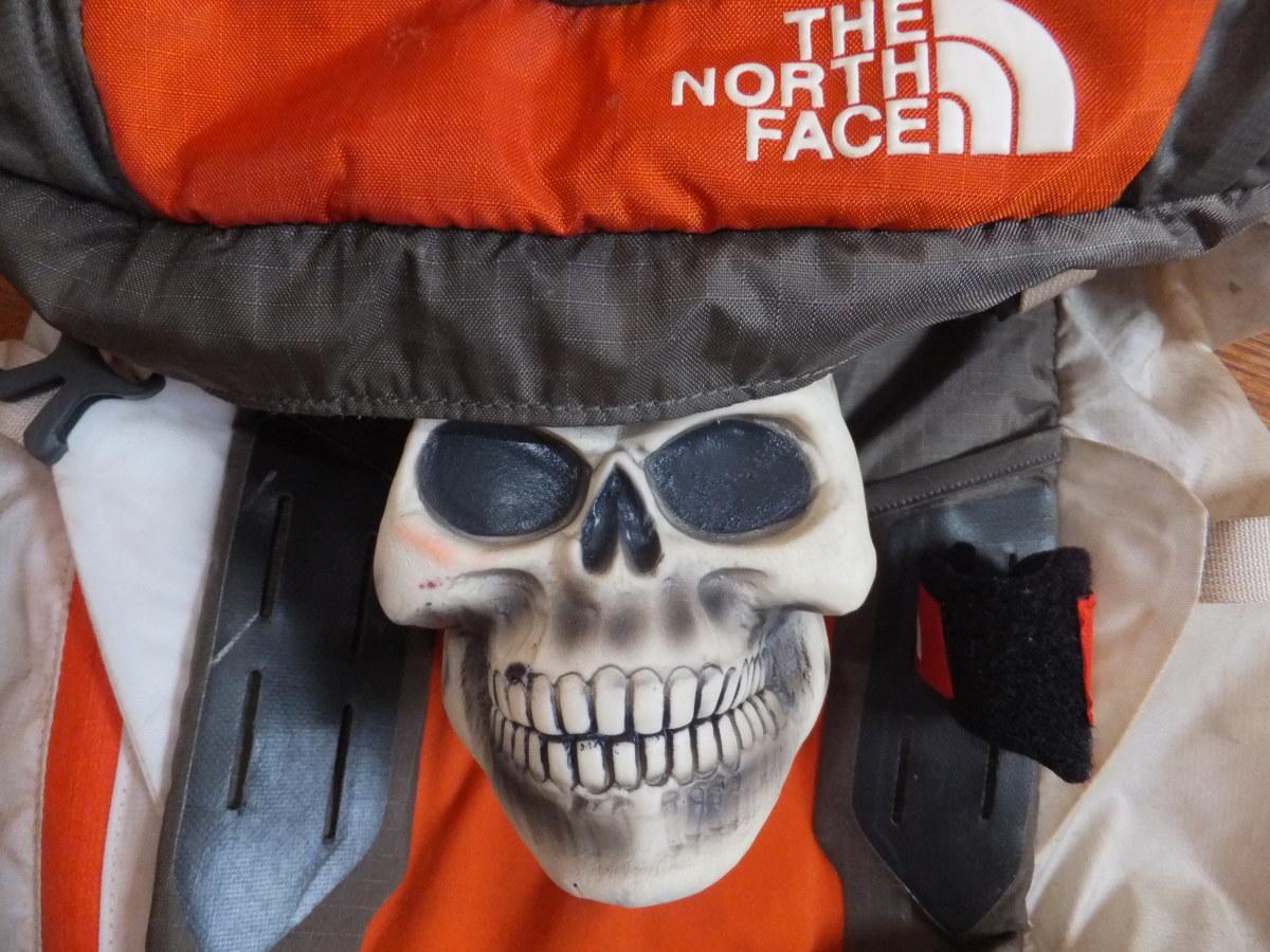 One of my hiking companions.
