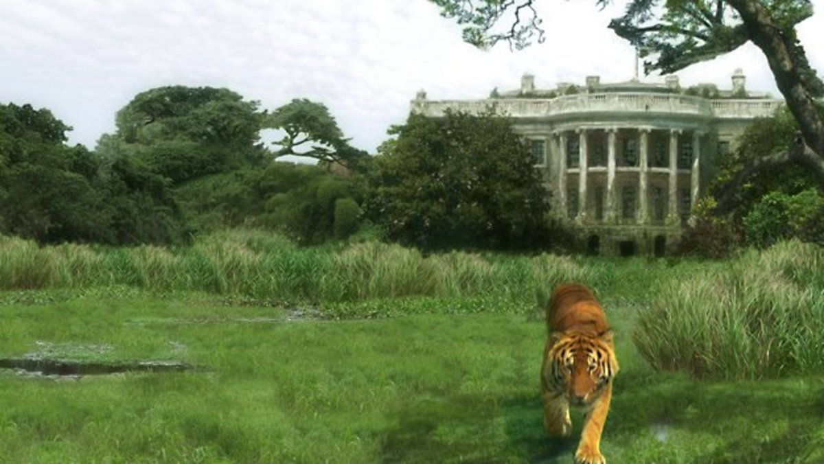 Escaped tigers will prowl across a newly wild Washington DC