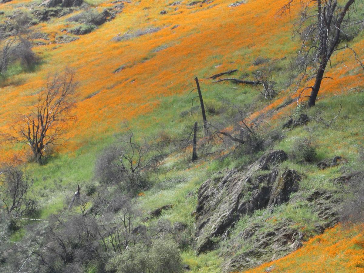 Poppies were blooming on the hillsides above our campsite outside of Yosemite Valley.