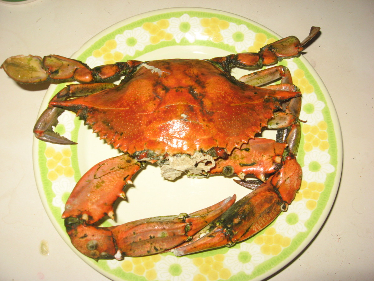 Huge blue crab!