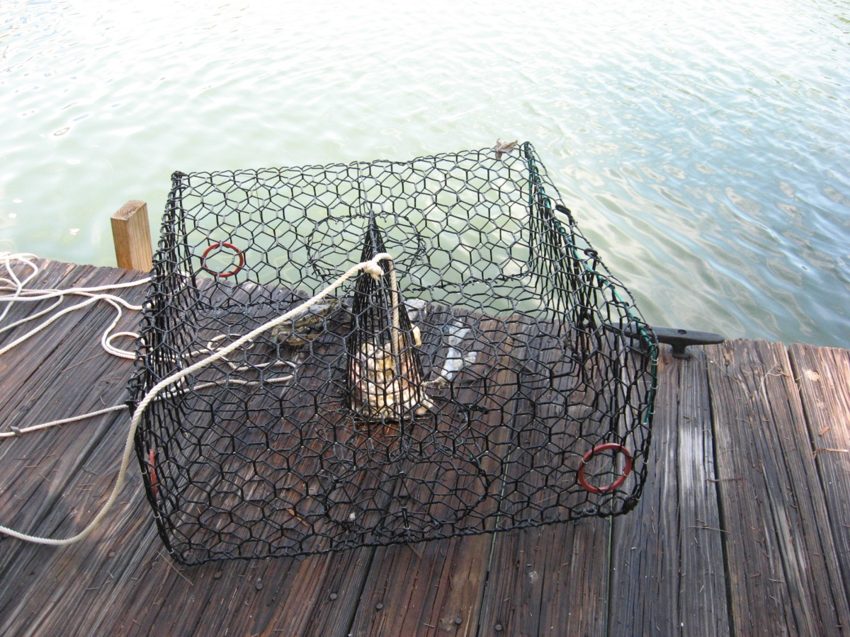 We like these crab traps best.