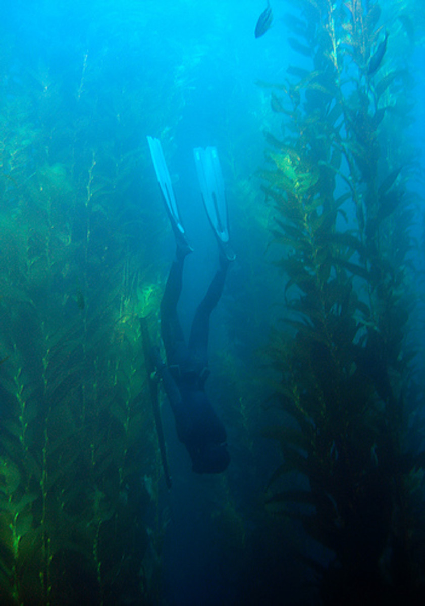Freediving while spearfishing